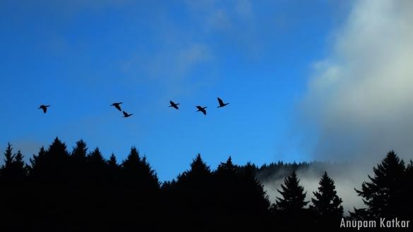 Cormorants, Humboldt Lagoons, Redwoods, Pacific Northwest