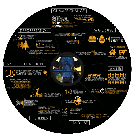 Click to view a comprehensive infographic