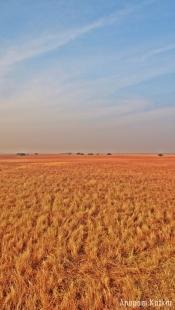 Grass, Blackbuck National Park, Velavadar, Savannah Grassland Landscape