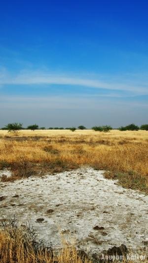 Blackbuck National Park, Velavadar, Savannah Grassland Landscape