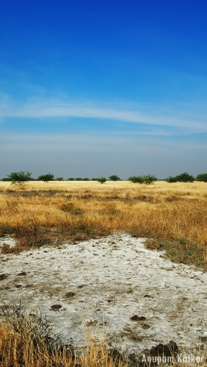 Blackbuck National Park, Velavadar, Savannah Grassland Landscape