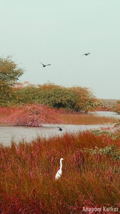 Wetland, Blackbuck National Park, Velavadar