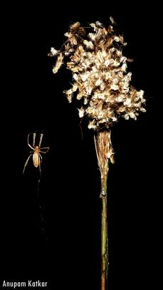 Minimalist spider
