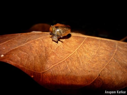 Snail at Night