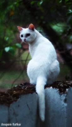Feral cat at twilight