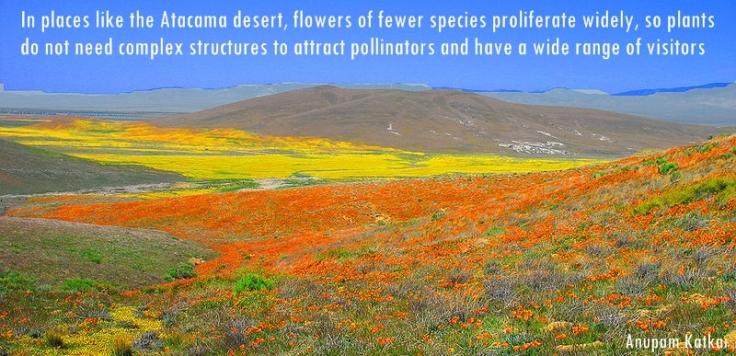 Butterfly-Atacama-Desert