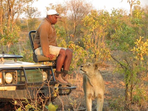 lion-safari-guide